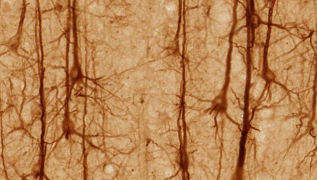 Buňky kůže se dají proměnit na neurony