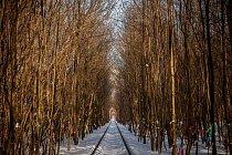 """V zimě odhalí stromy """"vzkazy"""" od návštěvníků."""