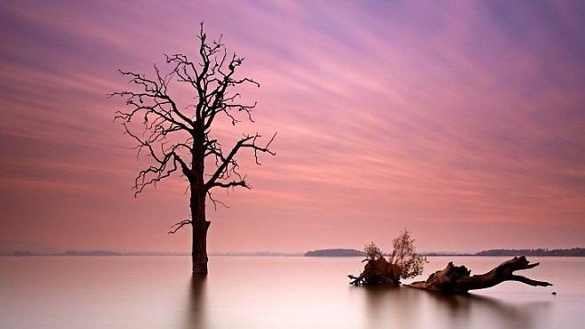 Strom samotář. Vyrůstá na hrobech lovců mamutů