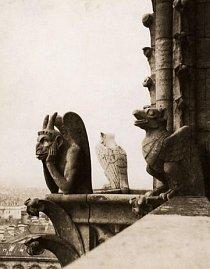 """Chrlič nazvaný Le Stryge – či """"upír"""" – je usazen nahoře na severní věži katedrály. Byl sem přidán při renovacích v polovině 19. století."""
