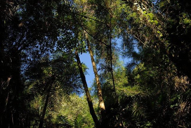 Stromové kapradiny na mexicko-guatemalské hranici