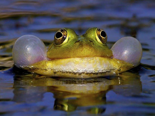 Žáby, žabky a žabáci