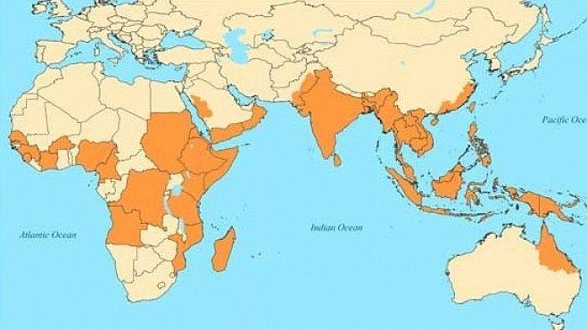 Nebezpečná horečka dengue ohrožuje (nejen) české cestovatele. Jak se chránit?