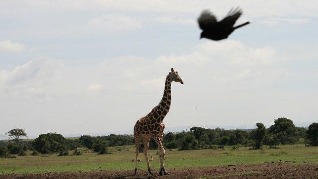 ON LINE z výpravy po Keni (II.)