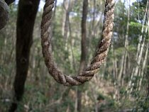 Les je plný smyček - oběšení je zde nejčastějším způsobem, jak ukončit život.