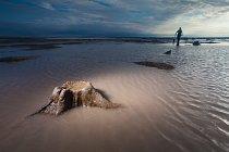 První svědectví se objevila už někdy před jedním a půl stoletím, když rybáři začali u břehů Nizozemska hromadně lovit s takzvanou tralovou sítí.