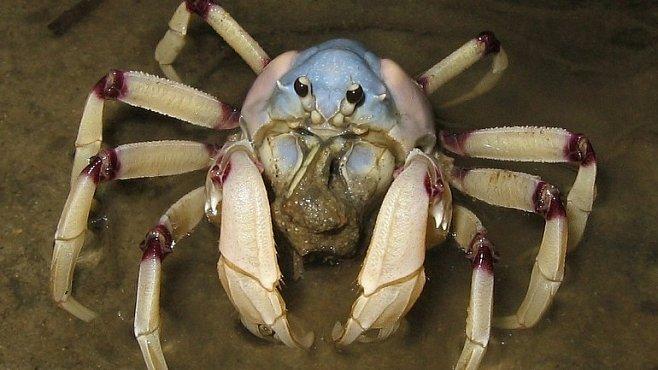 To není obyčejný krab – to je krabí počítač!