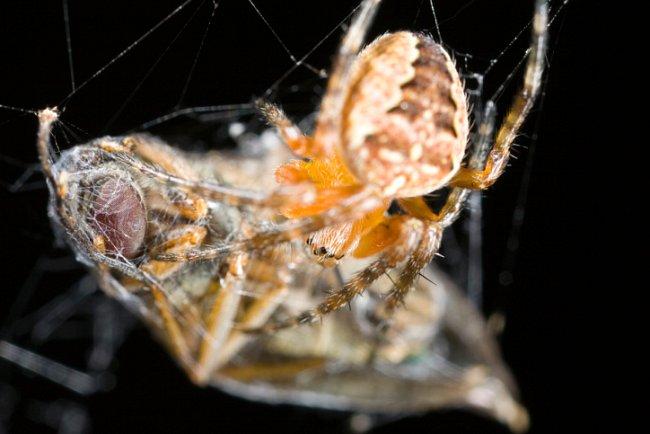 Pavoučí menu