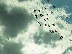 Nadpřirozeno: Když prší ptáci