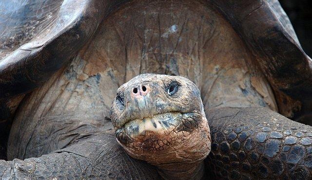 Obrovská želva byla veliká jako menší auto a žrala krokodýly