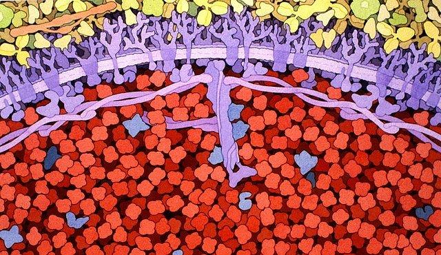 OBRAZEM: Buňky a umění jedno jsou