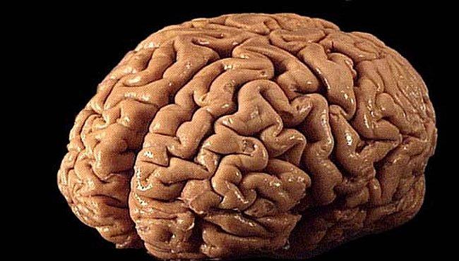 Idiokracie na postupu? Západní civilizaci prý kleslo IQ
