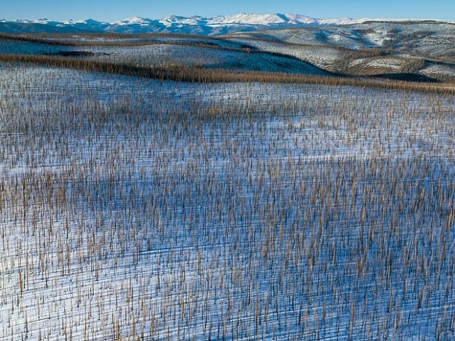 Poblíž průsmyku Wolf Creek zahubil lýkohub spolu sohněm téměř všechny stromy. Kalamita vColoradu vrcholí, počet útoků dalších škůdců, kteří rovněž prokousávají chodbičky vkůře, však stále ještě roste.