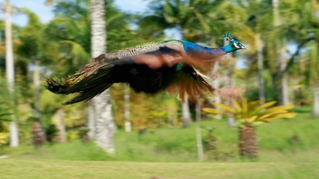 Střípky z Havaje: Ostrov Kauai je prý nejkrásnější místo světa. Proč?