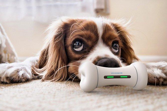Wickedbone dokáže reagovat i na momentální náladu psího mazlíčka.