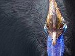 BBC: Bizarní tvorové Nové Guiney