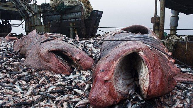 Žraločí ráj se na Kokosovém ostrově proměnil v peklo. Můžeme mu zabránit?