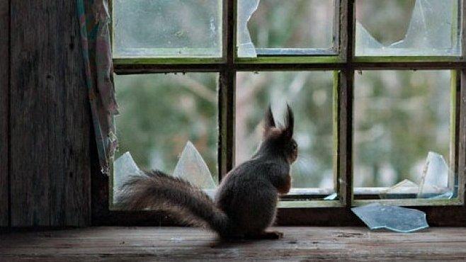Zvířecí squatteři. EXKLUZIVNĚ PRO NG