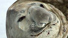 NEJ videa National Geographic: Souboje mořských obrů jsou krvavé, kruté a trvají hodiny