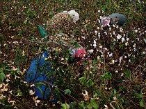 Bavlna z nilské delty je považována za jednu z nejkvalitnějších na světě. Úrodnou oblast však ohrožují populační tlaky a stoupající hladina moře.