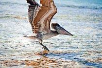 Na potravě z moře je závislé neuvěřitelné množství ptáků a ostatních živočichů.