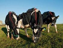 """V Centru pro výzkum potravin při irském Úřadu pro rozvoj zemědělství a potravinářství nezůstane žádné plynaté říhnutí nezaznamenané. """"Krávy jsou chodící kvasné komory,"""" říká výzkumník Matthew Deighton"""