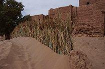 Písek je všude, zejména když začne pouštní bouře