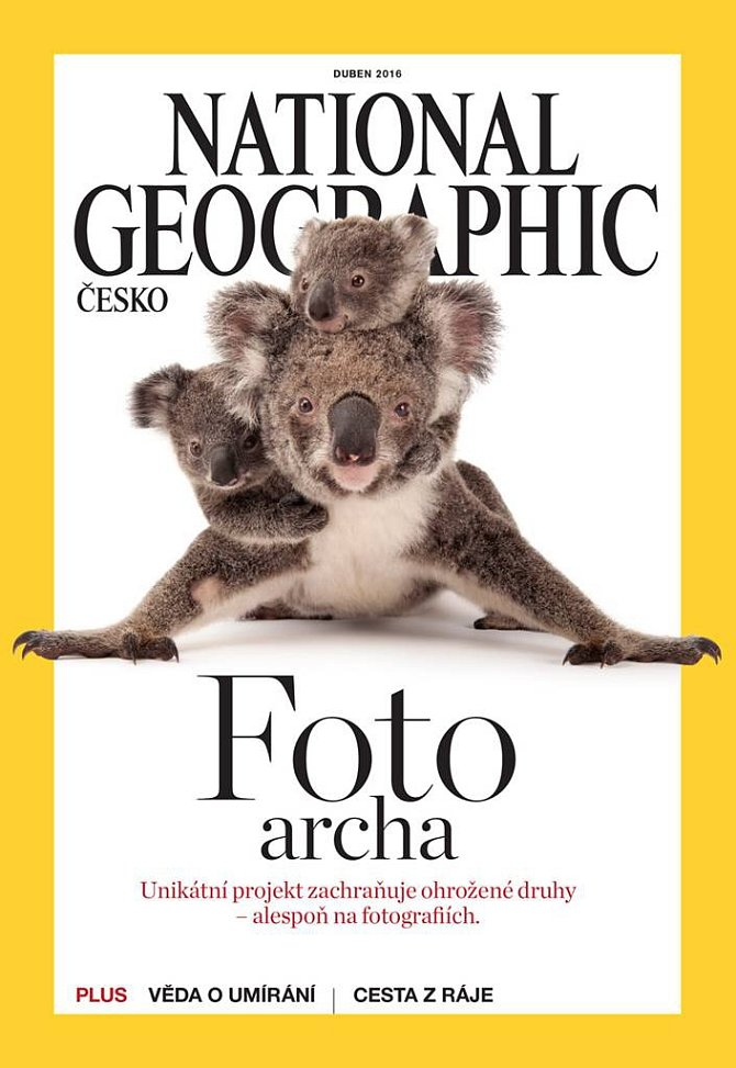 Foto archa: Koala