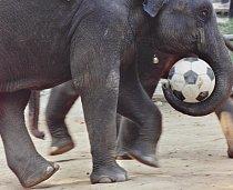 Festivalu se účastní více než 300 slonů.