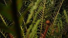 Dinosauři nepřežili, kapradiny ano. Jak se rostlinám podařilo obrovské plazy porazit?