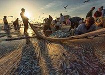 Skupiny rybářů vstávají brzy ráno. Technika výlovu je všem dobře známá a nic se nenechává náhodě.