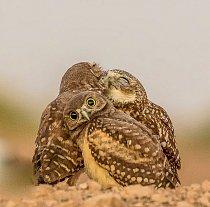Jeden ze 40 finalistů v soutěži Comedy Wildlife Awards o nejvtipnější fotografii se zvířaty.