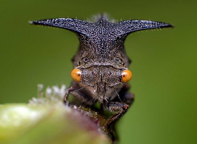 Hmyzí příšerky