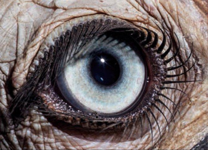 1. Čí jsou to oči? a) zoborožec kaferský b) dudek chocholatý c) vrána černá