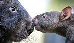 Hranaté výkaly vombatů jsou zázrakem přírody