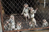 Koncentrační tábor pro opice