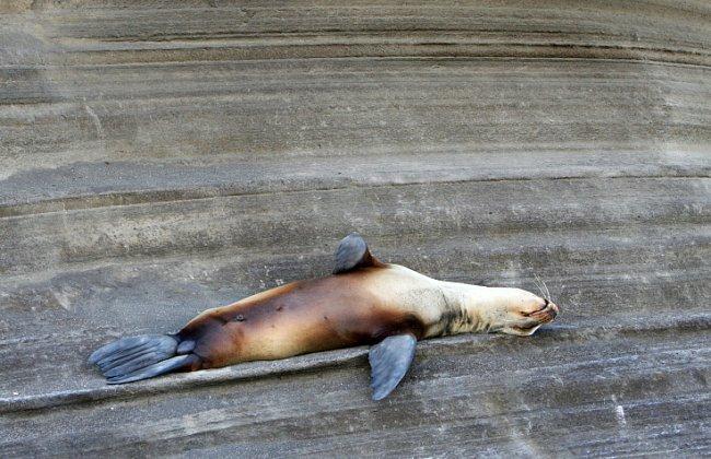 Spánek představuje pro většinu zvířat slabou chvilku - spáčům hrozí během odpočinku, že jejich nepozornosti využije nepřítel.