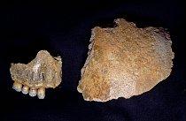 Čelist a část lebk ynalezené v jeskyni Kůlna