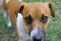 VIDEO: Chcete vědět, co si myslí váš pes? Výzkum potvrzuje, že to bude možné