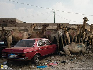 Obchod s velbloudy, Káhira