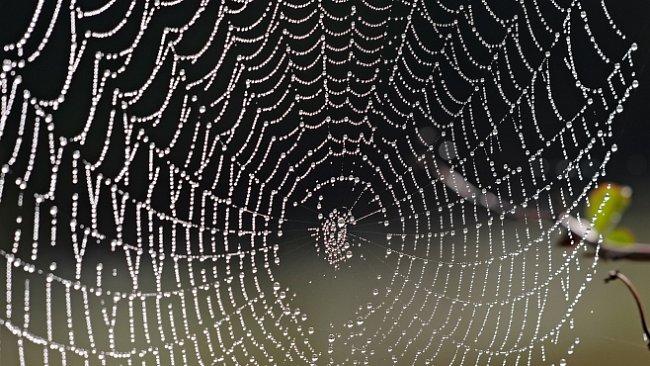 Pavoučí housenky