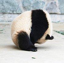 Správný okamžik se podařilo vyfotografovat jedné z návštěvnic zoo.