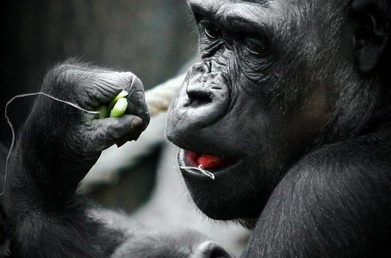 FOTOSOUTĚŽ se Zoo Praha: Podívejte se na vítězné snímky i výběr redakce