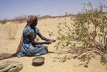 Ti nejchudší musejí sbírat jedovaté bobule zvané mokhet, které přestanou být jedovaté, jen když se vylouhují v několika čistých vodách. Ale to v Súdánu není snadné...