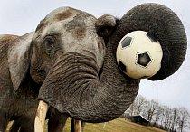 Sloní fotbal