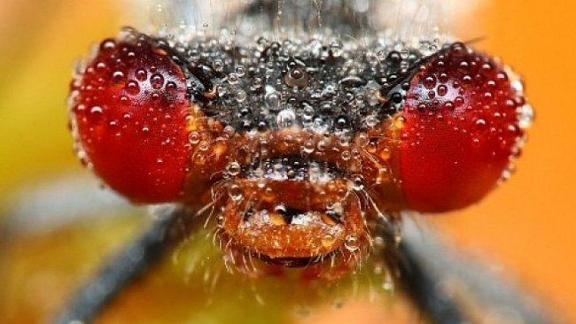Hmyz, nebo drahokam? Stačí kapka rosy a hmyz se promění ve šperky
