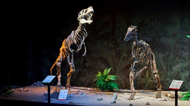 Oslavte den dětí zdarma na dinosauriu