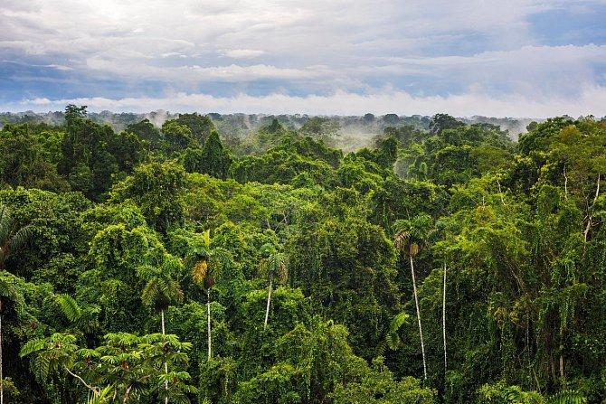 Ještě vroce 1960byl prales málo dotčený lidskou činností.