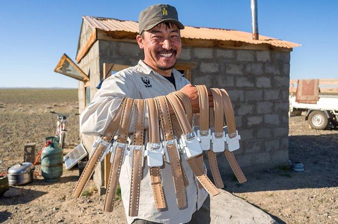 Pan Gantulga zWWF ukazuje telemetrické obojky, které pomohou sledovat migrační trasy sajg mongolských.