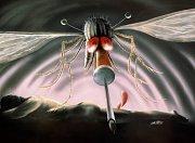 Existuje až 3000 druhů komárů, ale krev sají pouze samičky.